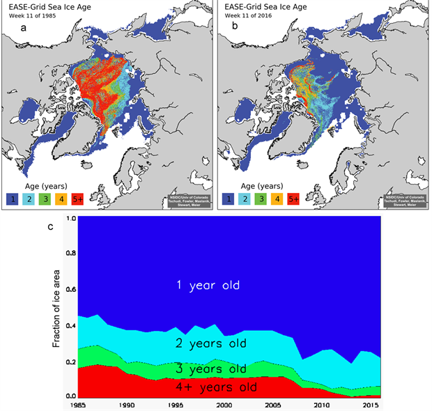 Sea ice age coverage maps and time series