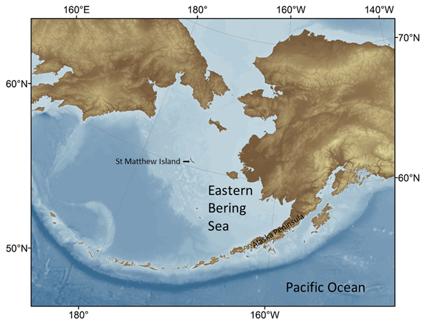 The Eastern Bering Sea