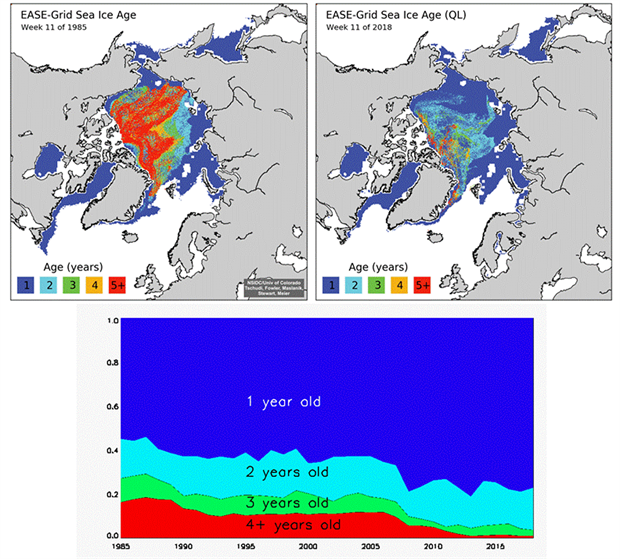 Sea ice age coverage maps