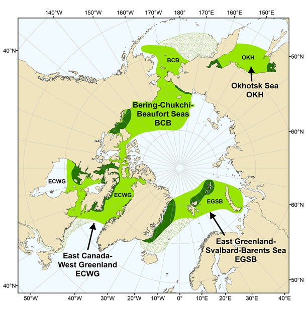 Map of range of the four recognized bowhead whale regional populations